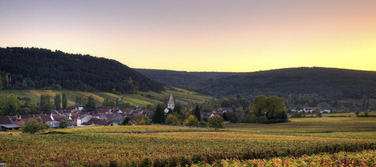 Vignoble français: entre terroir et mondialisation