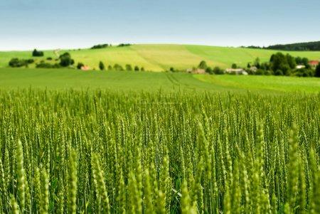 Tableau récapitulatif sur les différents types d'espaces ruraux en France